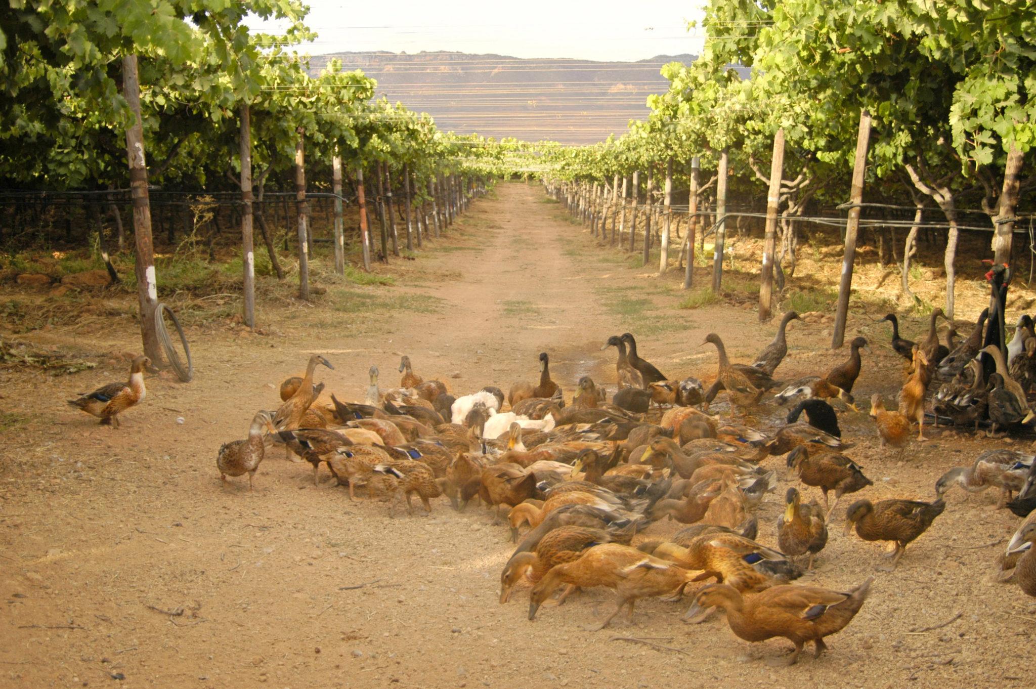 Wein ohne Sulfite